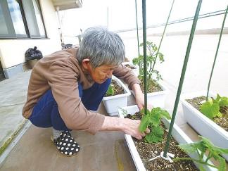 みなみ苑で野菜作り