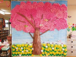 春の壁面は桜が満開です