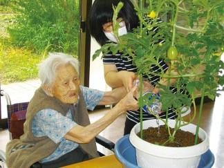 スイカの鉢植えを頂きました